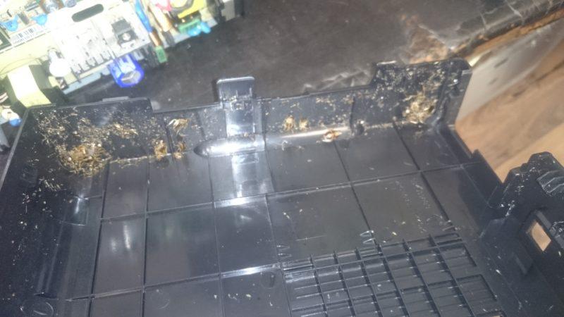 Тараканы в принтере